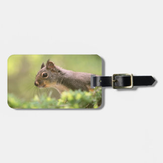 Squirrel in a Tree Tags For Luggage