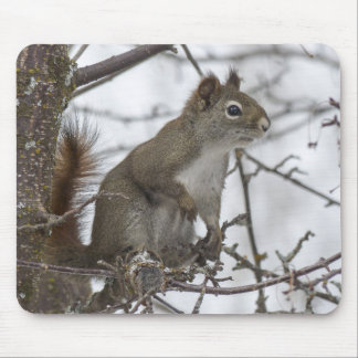 Squirrel in a tree mousepad