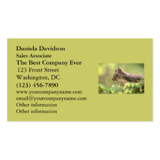 Squirrel in a Tree Pack Of Standard Business Cards
