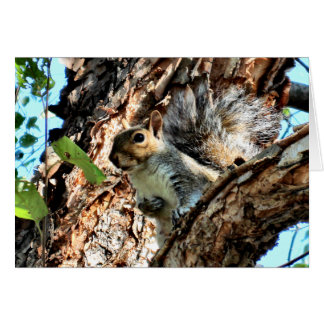 Squirrel in a Tree Photo Card