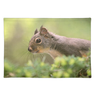Squirrel in a Tree Placemats