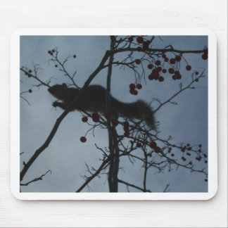 Squirrel in a Tree - products magnets tshirts Mouse Pad