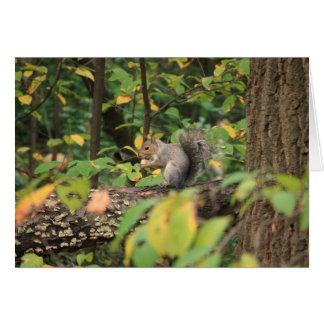 Squirrel in Autumn Notecard
