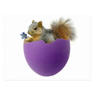 Squirrel in Eggshell Postcard