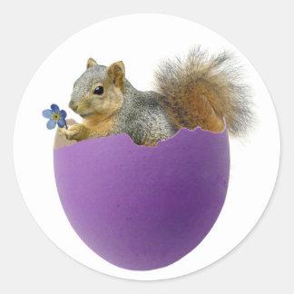 Squirrel in Eggshell Sticker