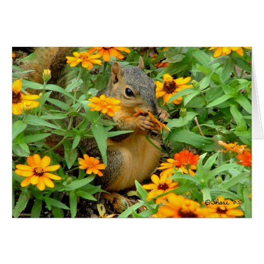 Squirrel In Marigolds (3774) Card