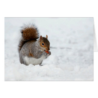 Squirrel in Snow with Berry Holiday Card