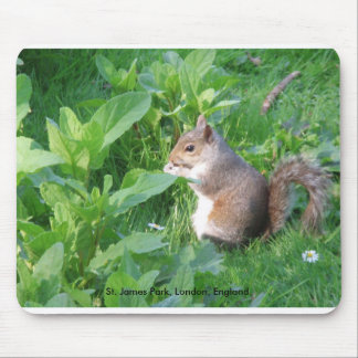 Squirrel in St. James Park, london England, St.... Mouse Pads