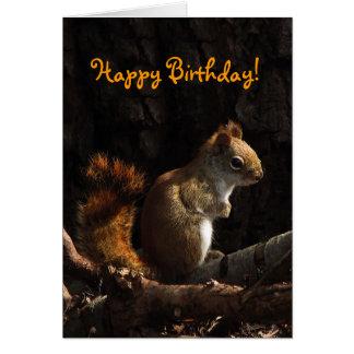 Squirrel in Sunlight Birthday Card