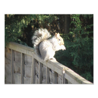 Squirrel in the Sunshine Photo Print