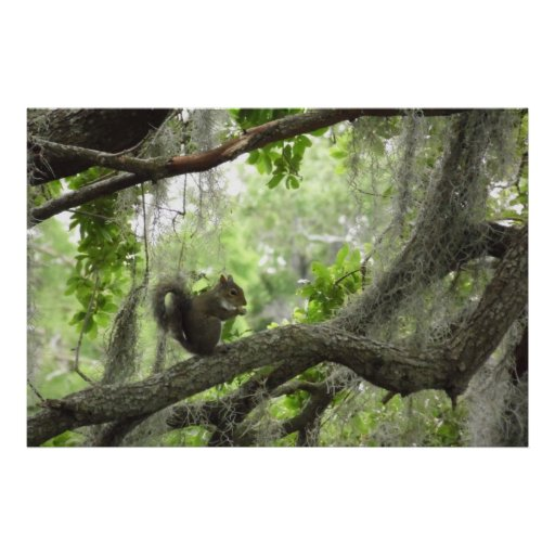 """Squirrel in Tree 40"""" X 27"""" Poster"""