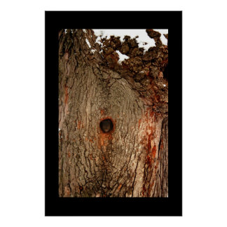 Squirrel in Tree Posters
