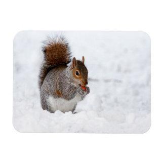 Squirrel In Winter Magnet