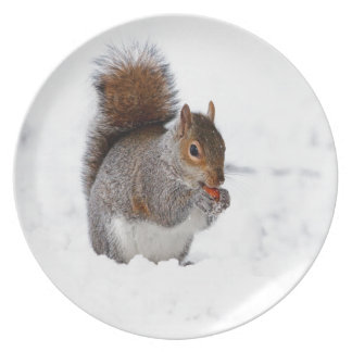 Squirrel In Winter Plate