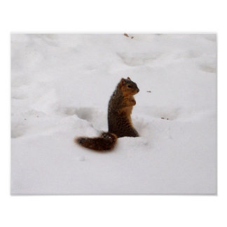 squirrel in winter poster