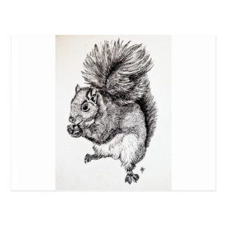 Squirrel Ink Illustration Postcard