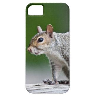 squirrel iPhone 5 cover