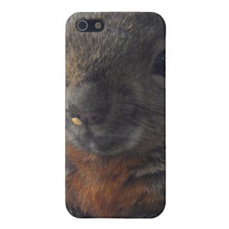 squirrel iPhone 5 covers