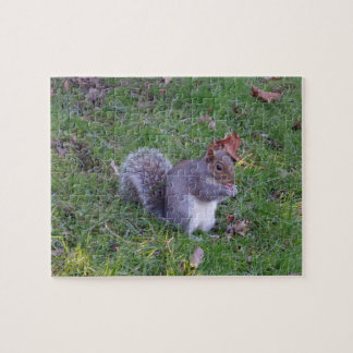 Squirrel Jigsaw Puzzle