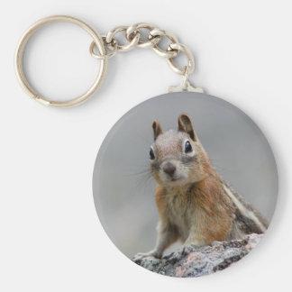 squirrel key chains