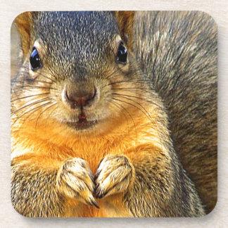 Squirrel Love_ Coaster