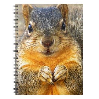 Squirrel Love_ Notebooks