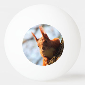 Squirrel Mammal Rodent Ping Pong Ball