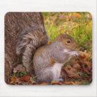 Squirrel Mosue Pad Mouse Mat