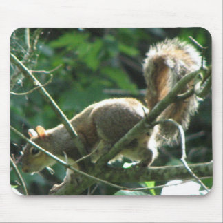 Squirrel Mouse Pads