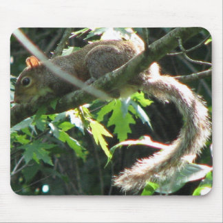 Squirrel Mouse Mat