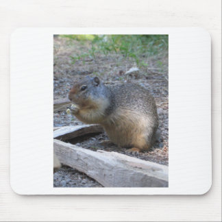 squirrel mouse mats
