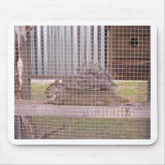 squirrel mousepads