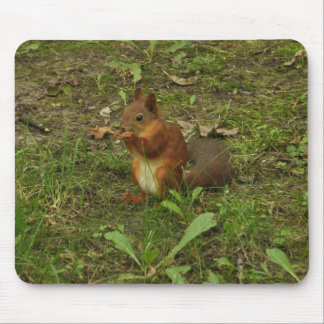 Squirrel Mousepads