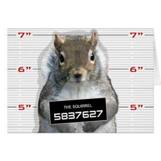 Squirrel Mug Shot Greeting Cards