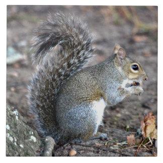 Squirrel Munching on an Acorn Tile