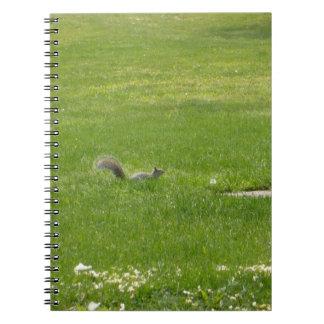Squirrel Notebook