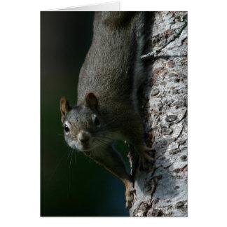 Squirrel Notecard 1