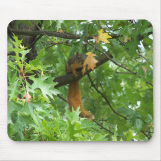 Squirrel On A Branch Mouse Mat