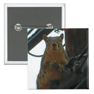 Squirrel on a Pole in Colorado 15 Cm Square Badge