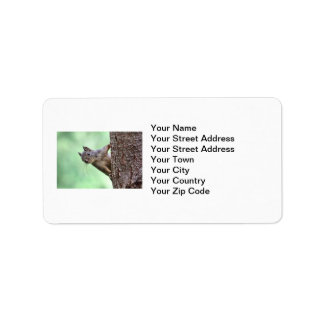 Squirrel On a Tree Address Label