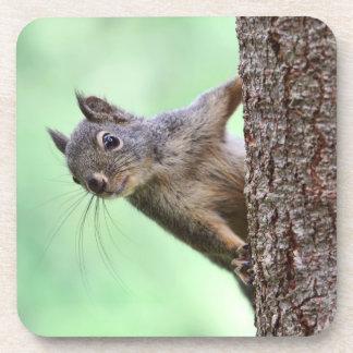 Squirrel On a Tree Beverage Coaster