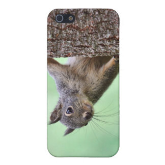 Squirrel On a Tree iPhone 5 Case