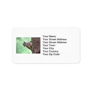 Squirrel On a Tree Address Label