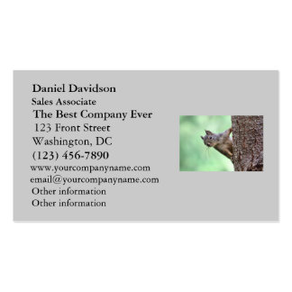 Squirrel On a Tree Pack Of Standard Business Cards