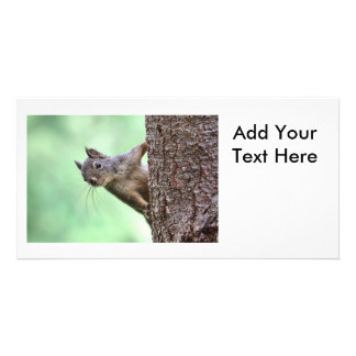 Squirrel On a Tree Photo Card