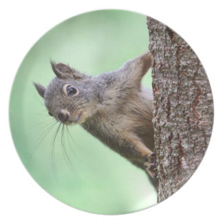 Squirrel On a Tree Party Plates