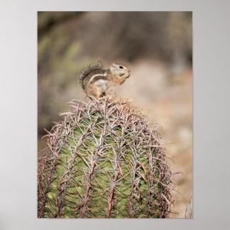 Squirrel on Barrel Cactus Poster