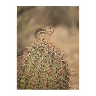 Squirrel on Barrel Cactus Wood Print