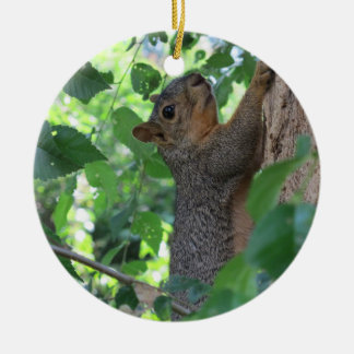 Squirrel on Elm Round Ceramic Decoration