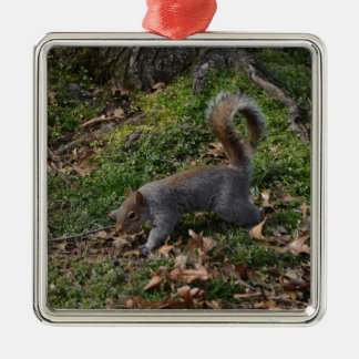 Squirrel On Forest Floor Silver-Colored Square Decoration